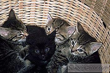panacur gatti giardia
