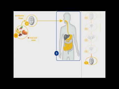 parazita lamblia gyógyszer
