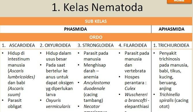Enterobiosis egészségügyi szabályok - A tojásféreg és az enterobiosis elemzése mennyi