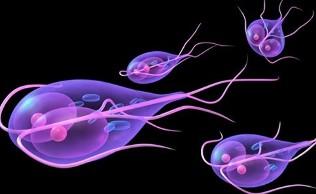 gyógyszerek a paraziták számára Giardia