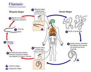 diphyllobothriasis típus