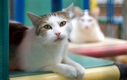 Sufletelele Codrutei au nevoie de ajutor! - Giardia pisica tratament