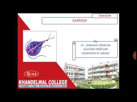 Giardia és helminták tünetei, Giardia-fertőzés (giardiasis)
