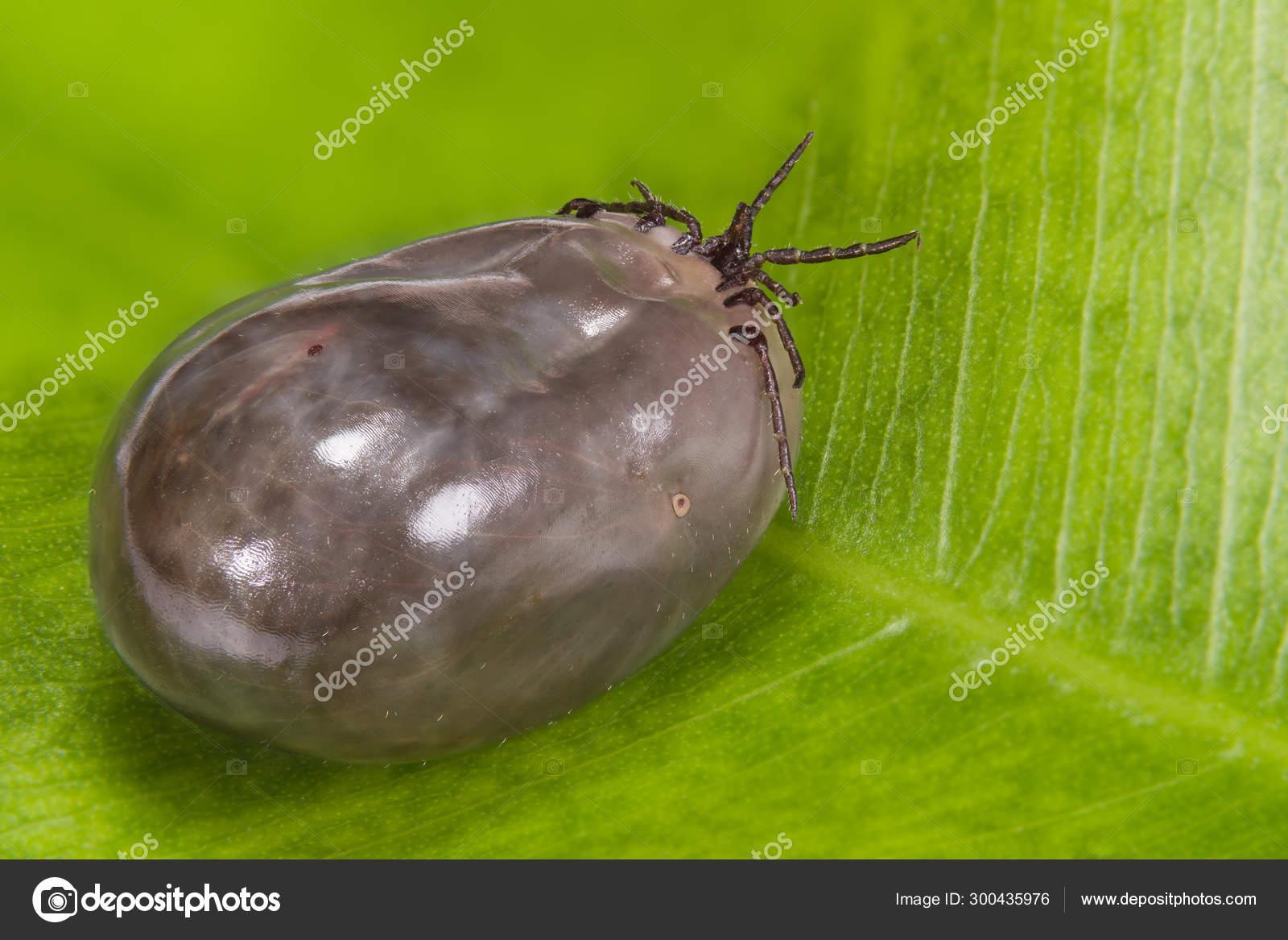 paraziták köhögés elleni kezelés