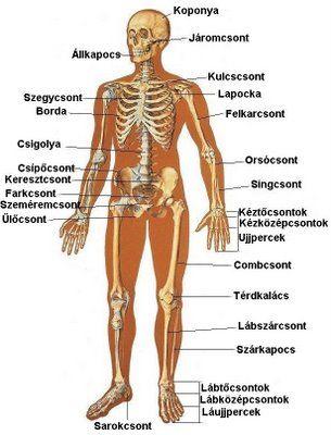 az emberi test féregtelenítése