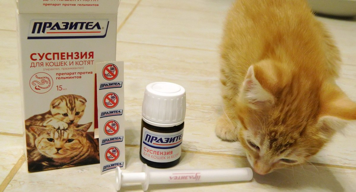 milyen tablettákat kell használni férgekből)