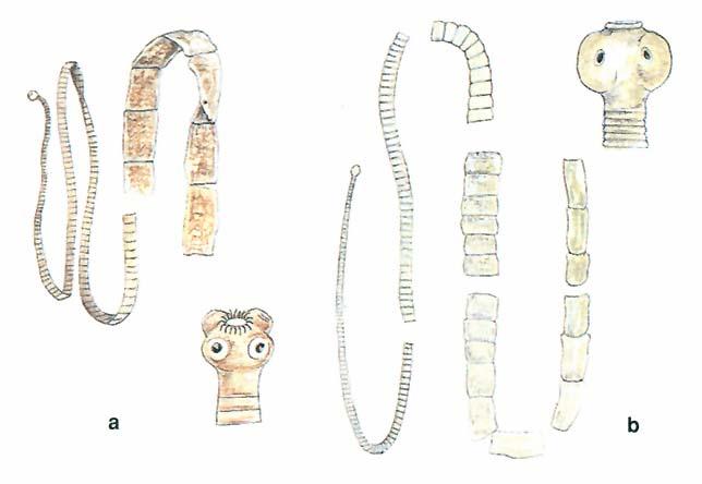 amrita készítmények parazitákhoz pinworms hogyan kell kezelni
