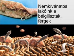 gyógynövény férgek artemisin a parazita mindig károsítja a gazdaszervezetet