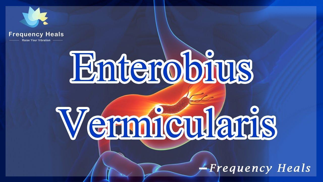 enterobiosis gv vel