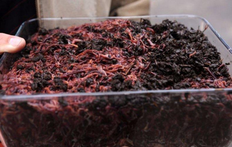 hány pinworms lehet egy gyermeknek a paraziták a tropicaux t fizetik