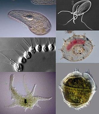 liszt helminthiasis és protozoa)