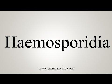 hemosporidia eletciklusa)