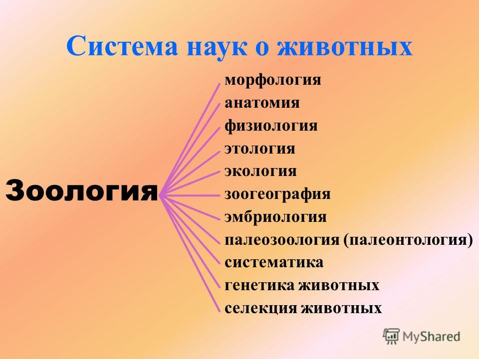 aszcariasis táblázat