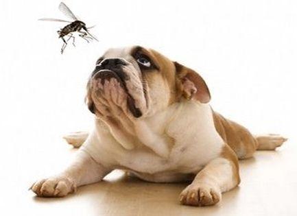 Itt a szúnyogszezon – itt a szívférgesség!