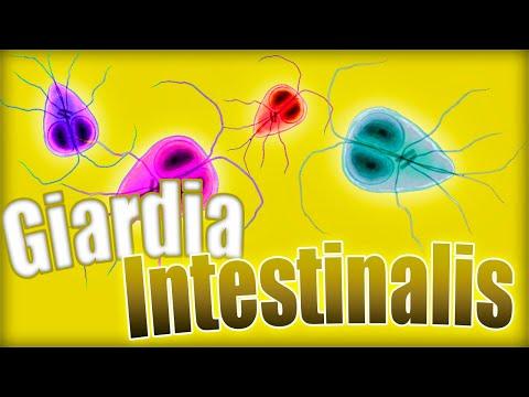 giardiasis kezelés tablettákkal)