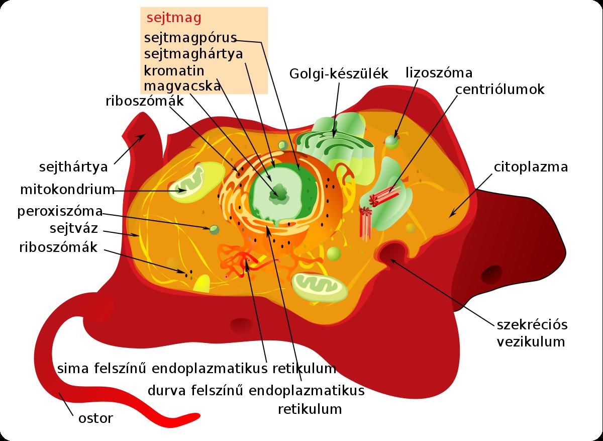 parazita a sejt belsejében