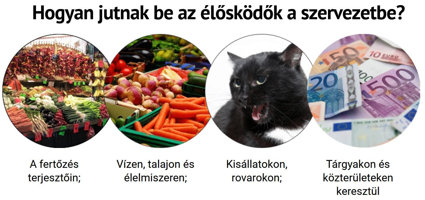 epeféreg fertozes tünetei)
