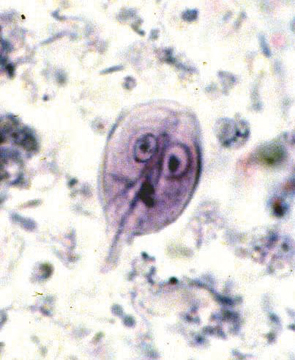 giardia in cats)