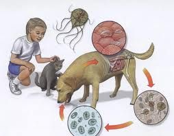 giardia duodenalis tratament