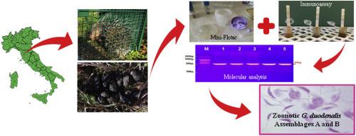 parazitaellenes tisztítás népi gyógyszerekkel a szervezet, amelyben a parazita él