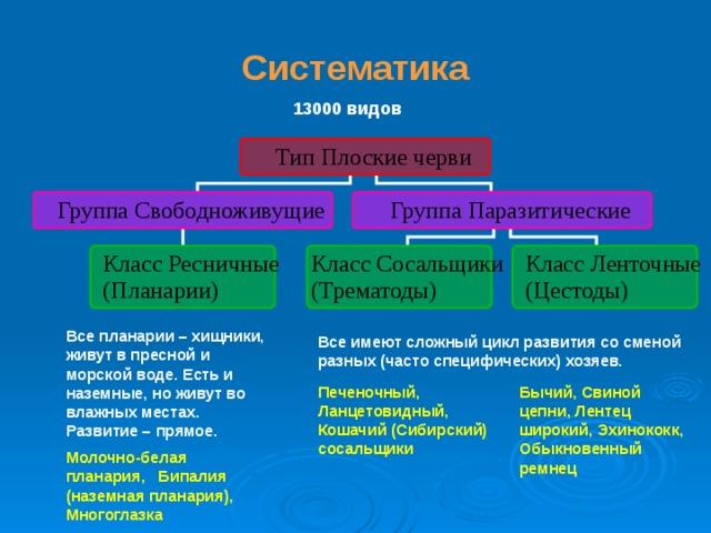 a szarvasmarha szalagféreg idegrendszerét képviselik)
