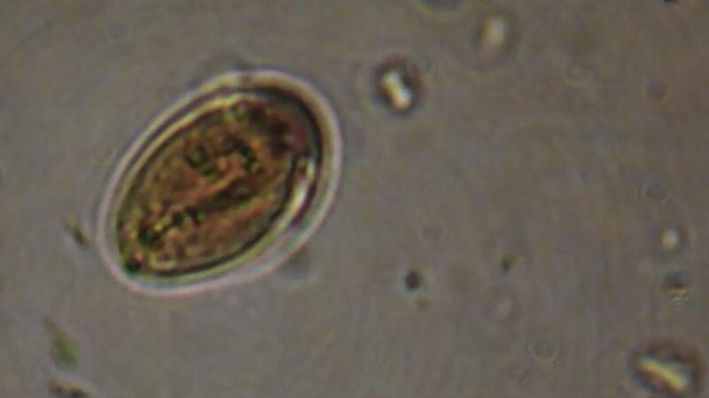 mik az állati paraziták a parazita a gazda halálához vezet