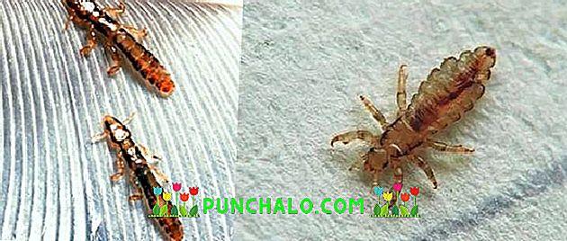 kettőspont tisztít 7 napos léböjt a rossz lehelet megszabadulásának legjobb módja