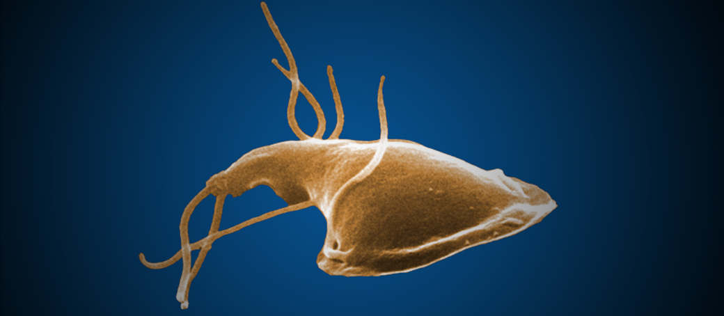 giardia bacteria in humans)