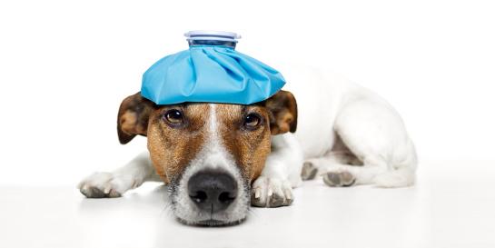 Nyúl kisokos | Murmuczok Állatgyógyászati Centrum és Patika
