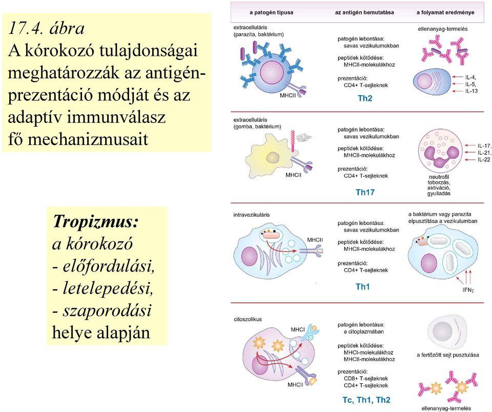baktériumok paraziták példák)