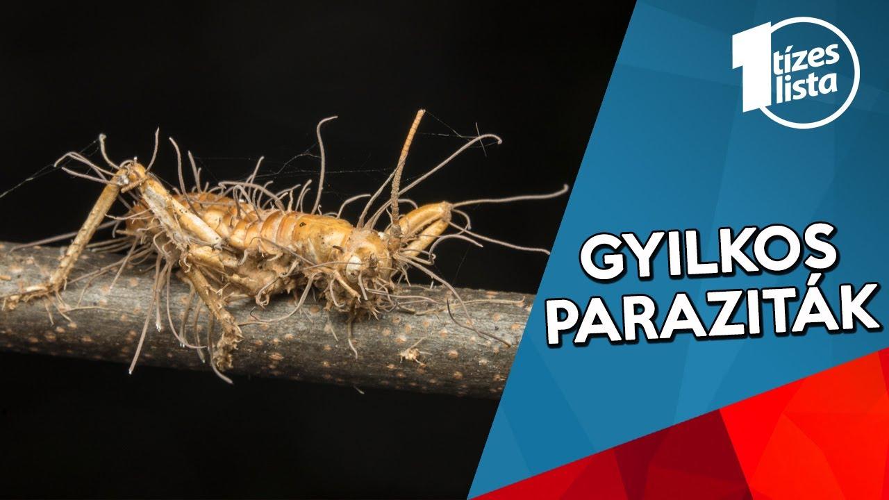 parazita kezelés lenmaggal)