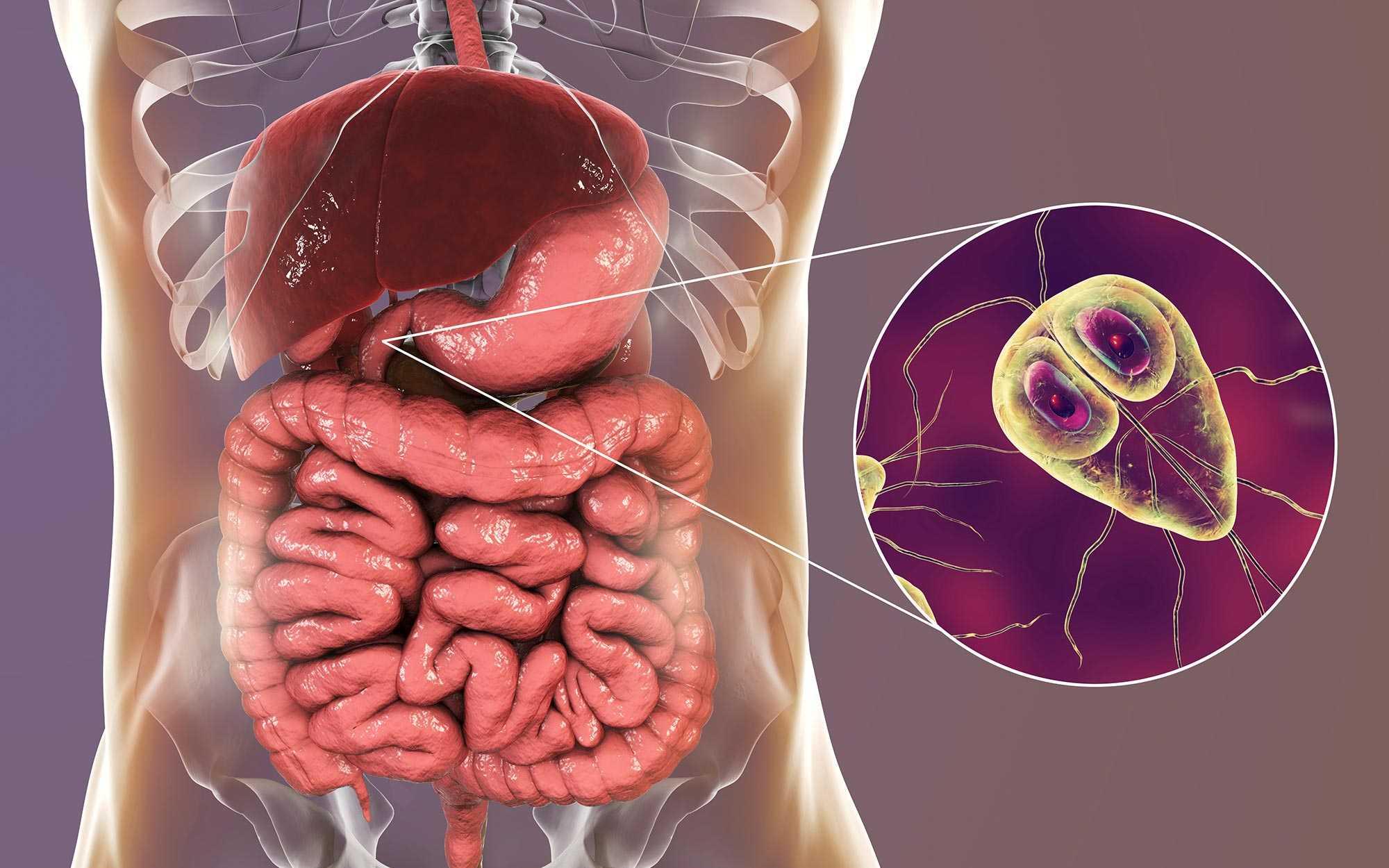 Epiparasites példák - Széles lenticum kórokozó