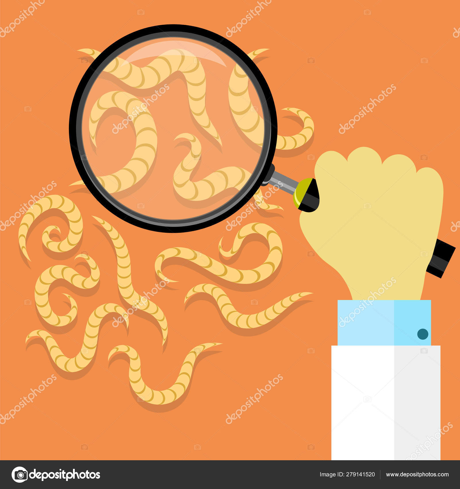 parazita pinworm)