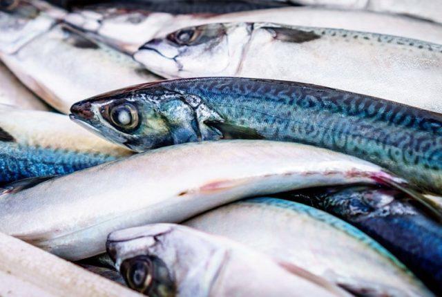 lehet e enni a galandféreggel fertőzött halat