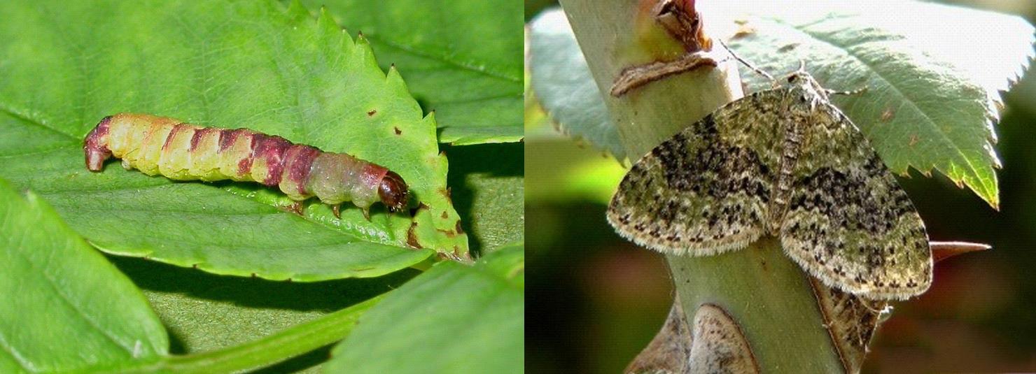 Rossz lehelet pulpitis. Mi okozza a rossz leheletet? | parodontax Pulpitis és rossz lehelet
