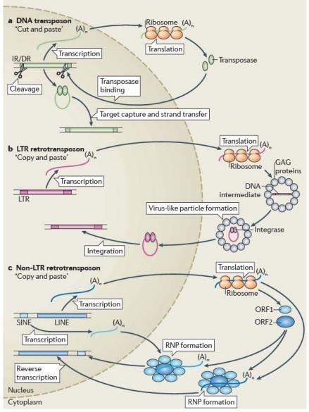 hogyan néznek ki a trichomonas paraziták