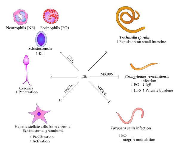 tabletták a paraziták számára a testben gyermekek férgek kezelése és megelőzése