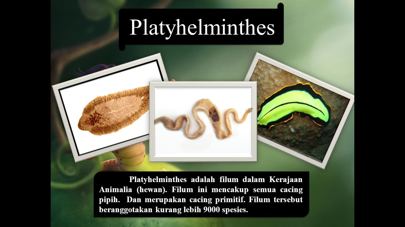 cacing platyhelminthes. ppt