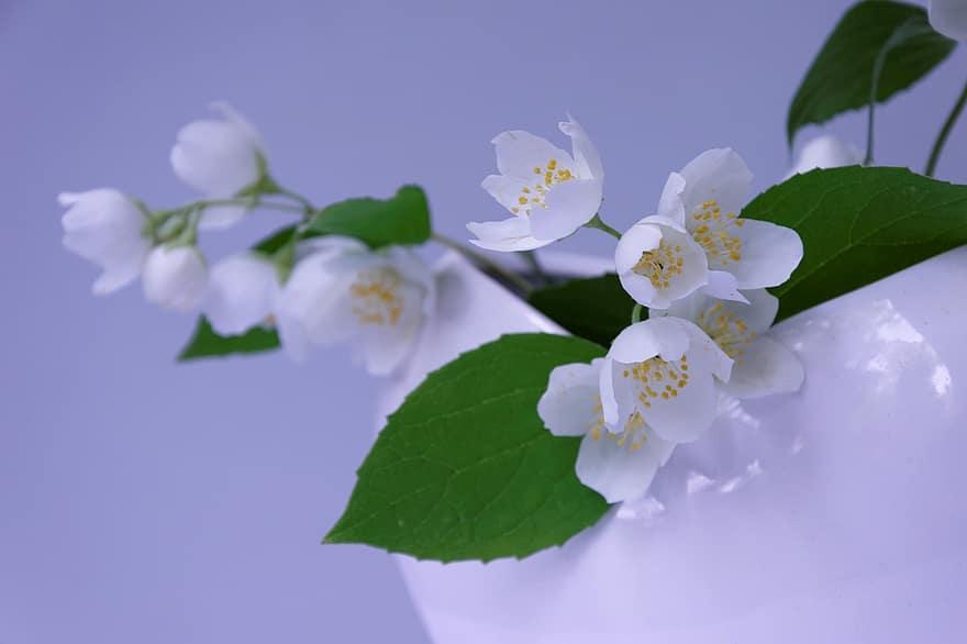 Rossz lehelet fehér virágzás, Minek a tünete lehet a lepedékes nyelv?