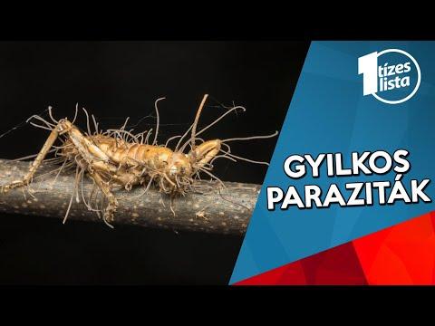 féregparaziták jellemzői