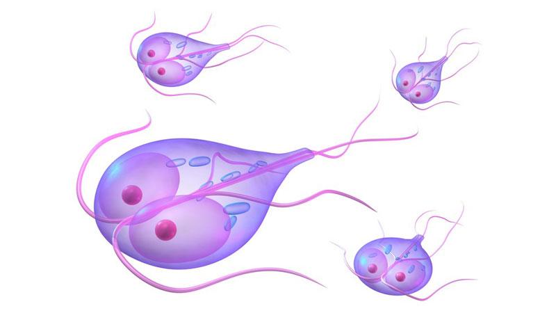 antigen giardia simptome)