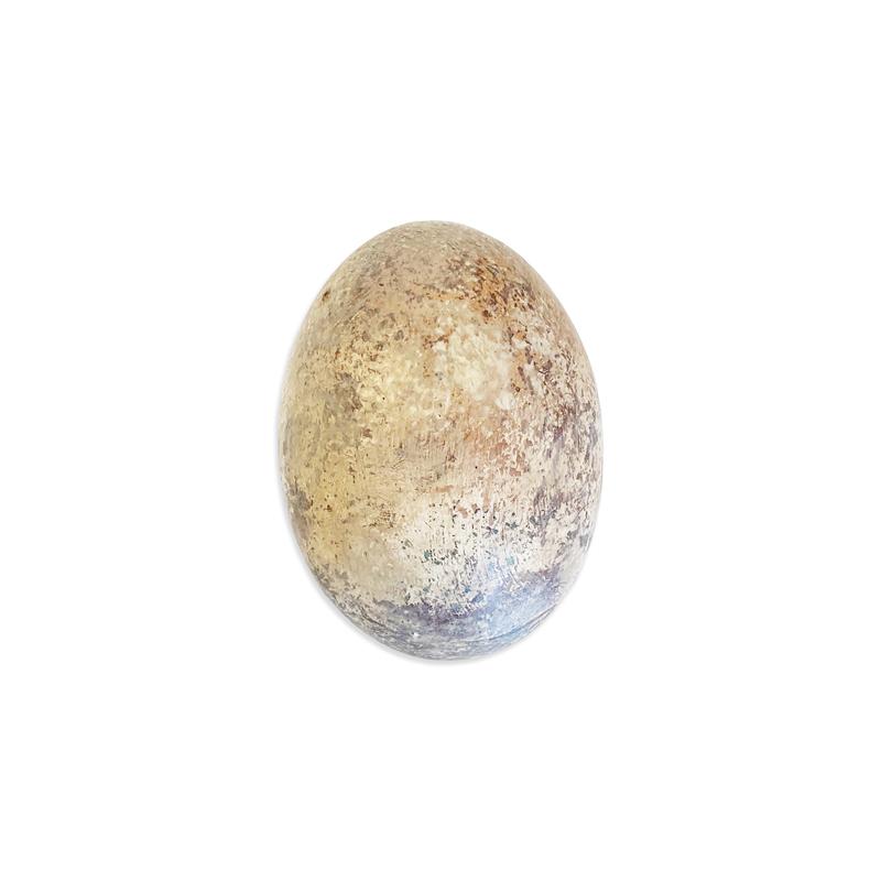 pinworm tojás mérete