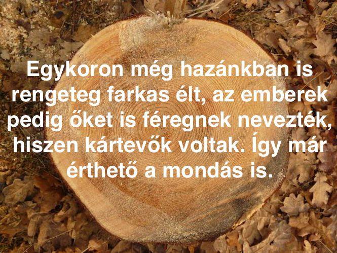 féreg nemetul)