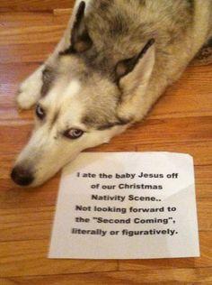 Férgesség jelei a kutyáknál? Fontos a féregtelenítés!