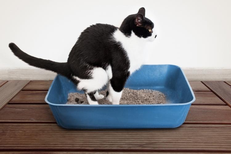 Macska bélférgesség