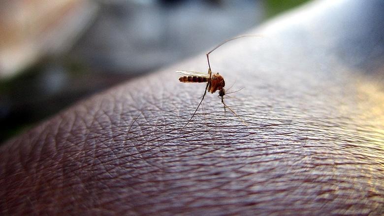 Baktériumvírusok és paraziták által okozott fertőzések Jobb megelőzni, mint kezelni