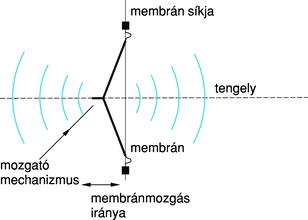 pinworm átviteli útvonalak