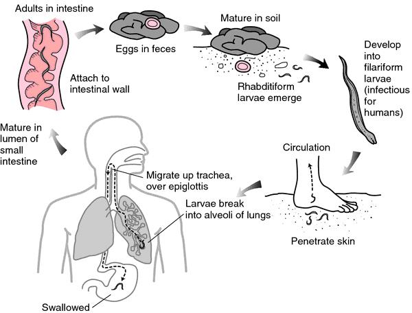 Bőrkiütés helmintos invázióval - Paraziták állati bőr paraziták
