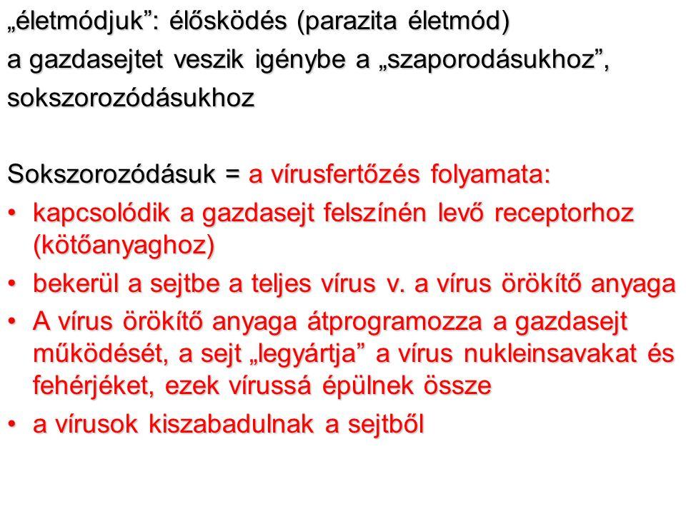 a paraziták osztályozása a parazita ideje szerint