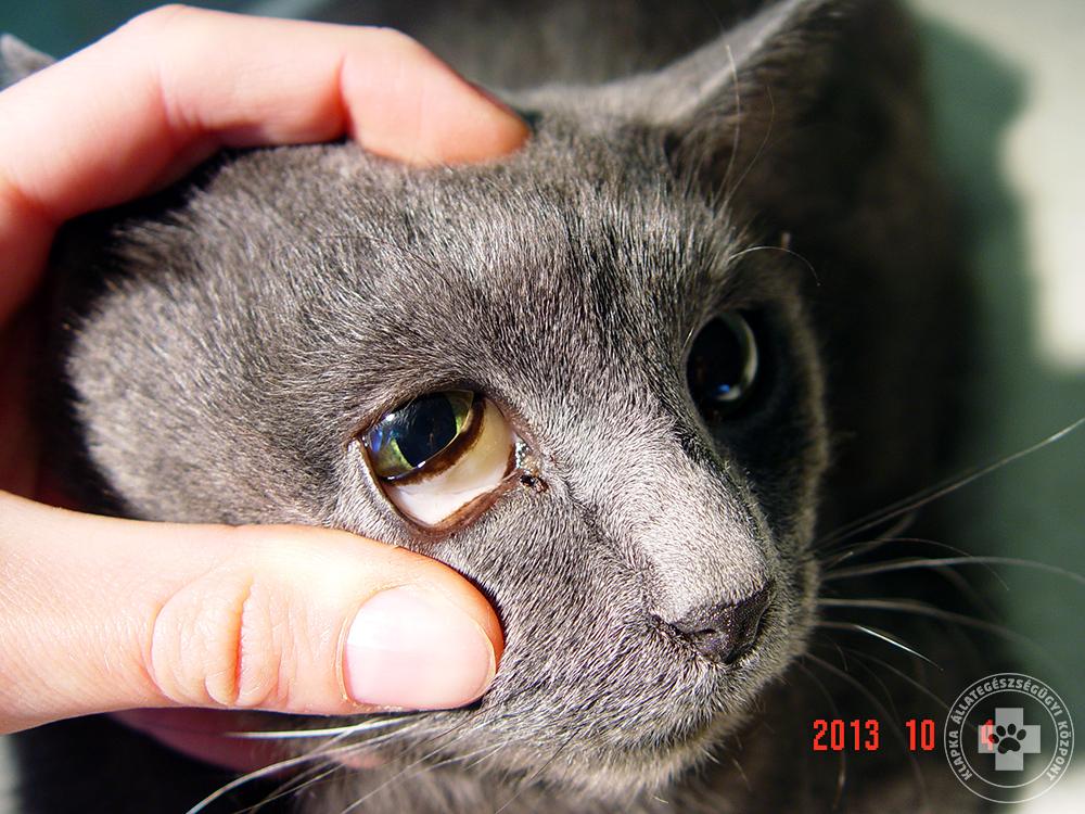 macska férgek tünetei földrajzi nyelvszag a szájból
